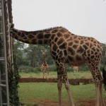 GiraffeManor_Kenya-1983