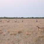 Kalahari-0515