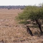 Kalahari-1100762