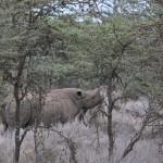 LewaDowns_Kenya-1120804