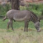 LewaDowns_Kenya-1120816