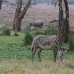 LewaDowns_Kenya-1120818