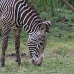 LewaDowns_Kenya-1120827