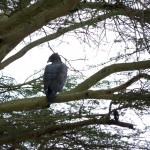 LewaDowns_Kenya-1120828