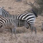 LewaDowns_Kenya-1120841