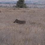 LewaDowns_Kenya-1120846