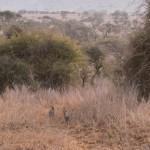 LewaDowns_Kenya-1120855