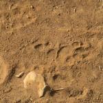 LewaDowns_Kenya-1120894