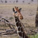 LewaDowns_Kenya-1120917