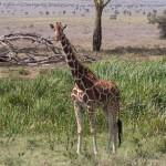 LewaDowns_Kenya-1120919