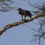 LewaDowns_Kenya-1120949