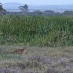LewaDowns_Kenya-1120985
