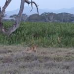 LewaDowns_Kenya-1120988