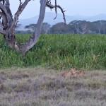 LewaDowns_Kenya-1120989