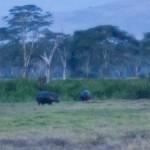 LewaDowns_Kenya-1130015