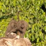 LewaDowns_Kenya-1130052