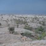 LewaDowns_Kenya-1130066