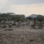 LewaDowns_Kenya-1479