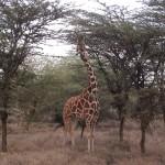 LewaDowns_Kenya-1484