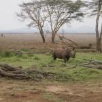 LewaDowns_Kenya-1495