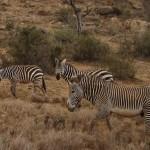 LewaDowns_Kenya-1506