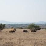 LewaDowns_Kenya-1519