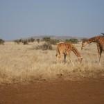 LewaDowns_Kenya-1521