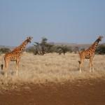 LewaDowns_Kenya-1523