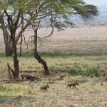 LewaDowns_Kenya-1538