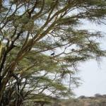 LewaDowns_Kenya-1540