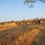 LewaDowns_Kenya-1552