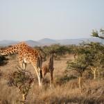 LewaDowns_Kenya-1574