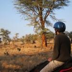 LewaDowns_Kenya-1593