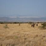 LewaDowns_Kenya-1601
