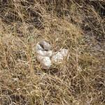 OkavangoDelta-0832