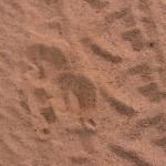 Sarara_Kenya-1130166