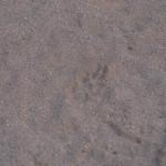 Sarara_Kenya-1130258