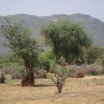 Sarara_Kenya-1870