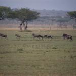 Serengeti-1120429