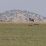 Serengeti-1120475