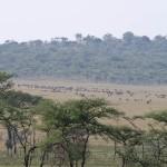 Serengeti-1120487