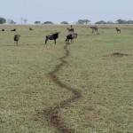 Serengeti-1120494