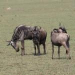 Serengeti-1120500
