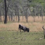 Serengeti-1120509