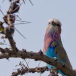 Serengeti-1120526