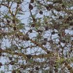 Serengeti-1120531