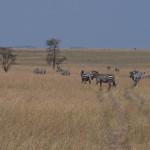 Serengeti-1120532