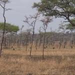 Serengeti-1120553