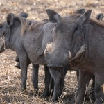Serengeti-1120558