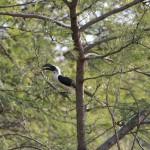 Serengeti-1120563